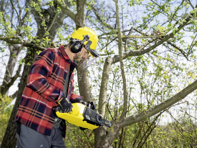 Jak prořezávat stromy a keře na podzim?