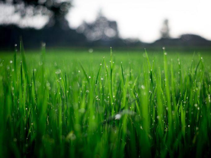 Vertikutace trávníku: proč je důležitá a kdy s ní začít