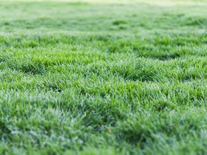 Péče o trávník na podzim: provzdušněte ho a hnojte